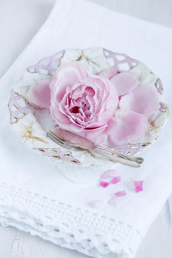 rose_7995